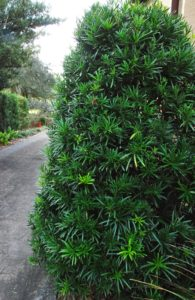Trim the hedge so it is wider at the base